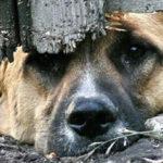 2017 12 7 собака 150x150 - На обед - соседская собака