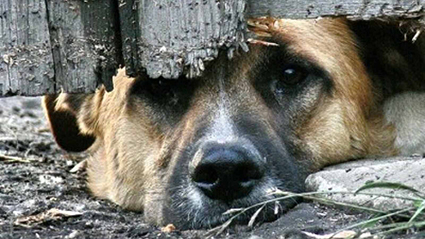 2017 12 7 собака - На обед - соседская собака