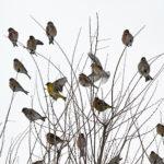 2017 9 8 птицы 150x150 - Птичья ночлежка