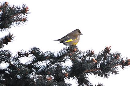2017 9 8 птицы1 - Птичья ночлежка