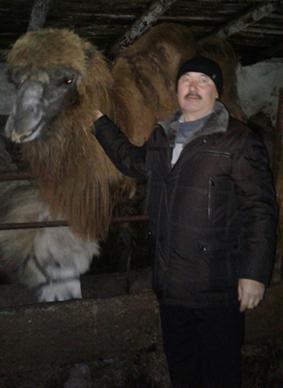 2017 13 6 фермер с верблюдами - Фермер разводит верблюдов