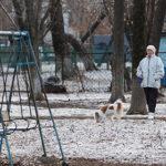 2017 14 8 собаки во дворе 150x150 - Собаки «заминировали» все дворы