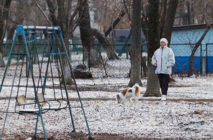2017 14 8 собаки во дворе - Собаки «заминировали» все дворы