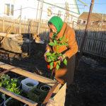 2017 16 4 1 150x150 - Пенсионерка украшает село