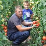 17 п свое дело 150x150 - В сельской теплице - помидорный бум
