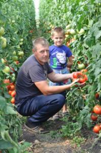 17 п свое дело - В сельской теплице - помидорный бум