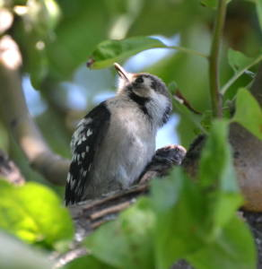 8 подв 2 - Живет в Оренбуржье такая птичка…