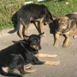 633f52a379c4ef0ad7fd1005af312fe2 150x150 - Почтальоны в заложниках у своры собак