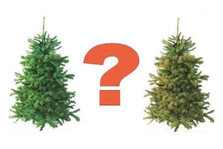 елка - Какую елку выбрать?