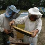 8 глав 2 150x150 - Что тревожит пчеловодов?