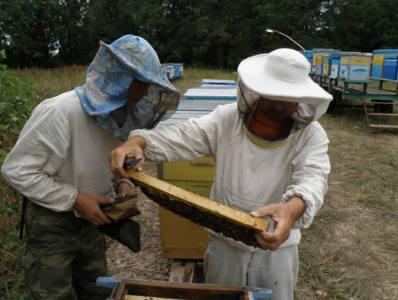 8 глав 2 - Что тревожит пчеловодов?