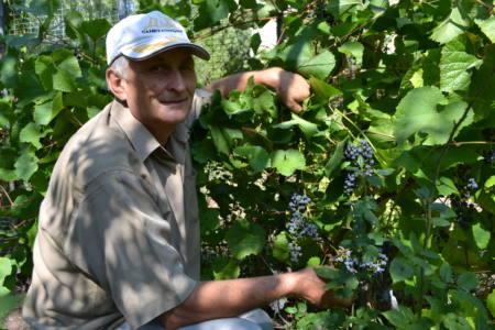 DSC 0407 - Виноград со вкусом... смородины