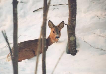 3 глав 2 - Звери в снежном плену