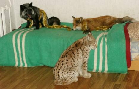 3 - Животные - под запретом