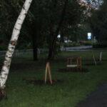 IMG 3727 150x150 - Аллея каштанов пенсионера Филиппова