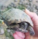 2 глав 2 146x150 - Судьба черепах пока неизвестна