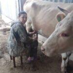 5 глав 2 150x150 - Молоко и сливки - по контракту