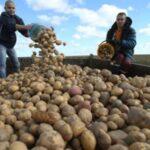 3 картошка 150x150 - Оренбуржцев без овощейне оставят