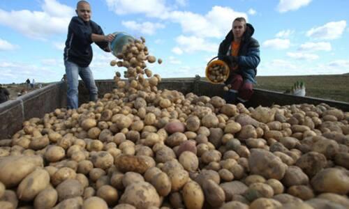 3 картошка - Оренбуржцев без овощейне оставят