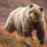 5bfad2c175e33ef7ac4a 150x150 - На сельской улице - медведь
