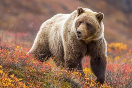 5bfad2c175e33ef7ac4a - На сельской улице - медведь