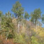 5 п 150x150 - Осенние сны заповедника Шайтан-Тау
